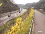 드론으로 본 고속도로 - 꽃길, 봄